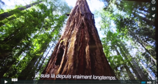 Mother Channel – www.motherchannel.com - COP21 Nature is Speaking