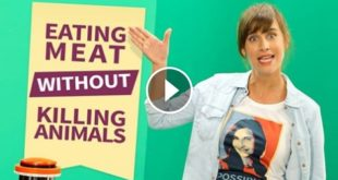Meat without killing Animals Image