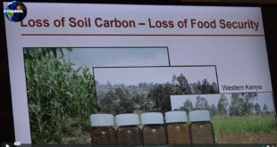 Mother Channel | COP23 SOIL FOR CARBON SEQUESTRATION CORNELL UNIVERSITY