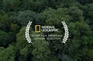 MOTHER CHANNEL | National Geographic Forest Plants